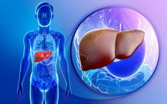 Supports Liver Health