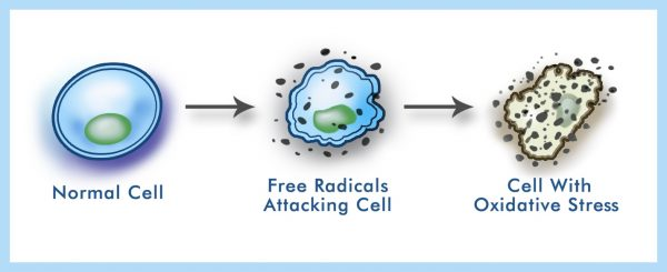 Reduces Free Radicals