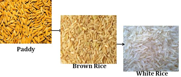 Is Rice Processed?