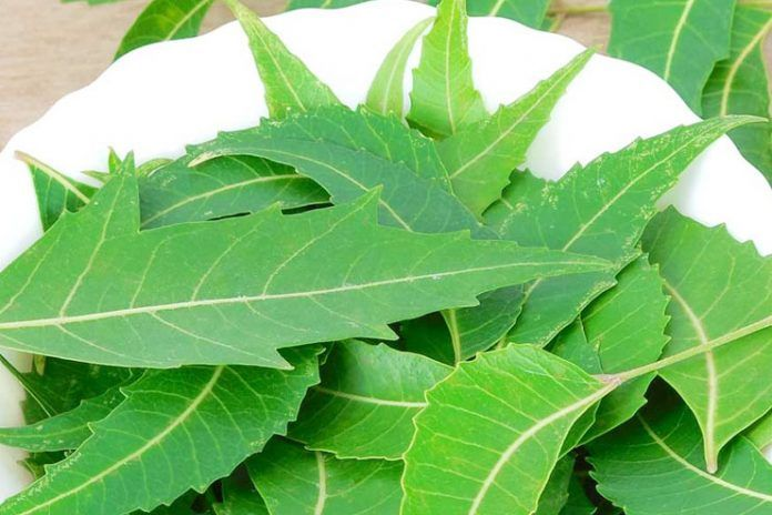Neem Powder Side Effects
